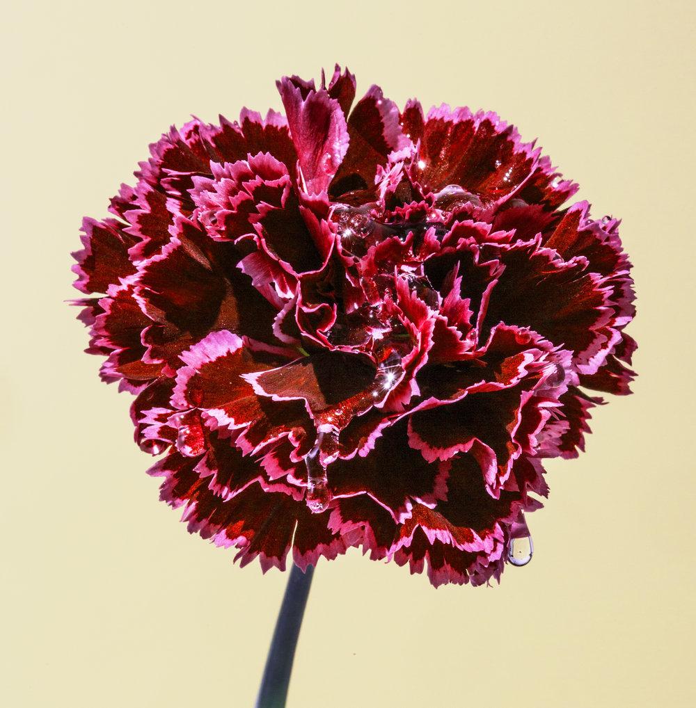 Details.Suzanne.Saroff.Flower.Series.jpg