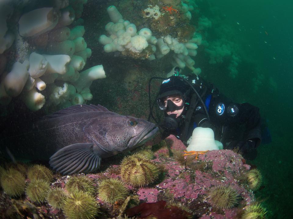 Keystone Underwater Park Whidbey Island, WA
