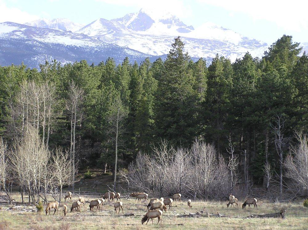 Elk_Colorado.jpg