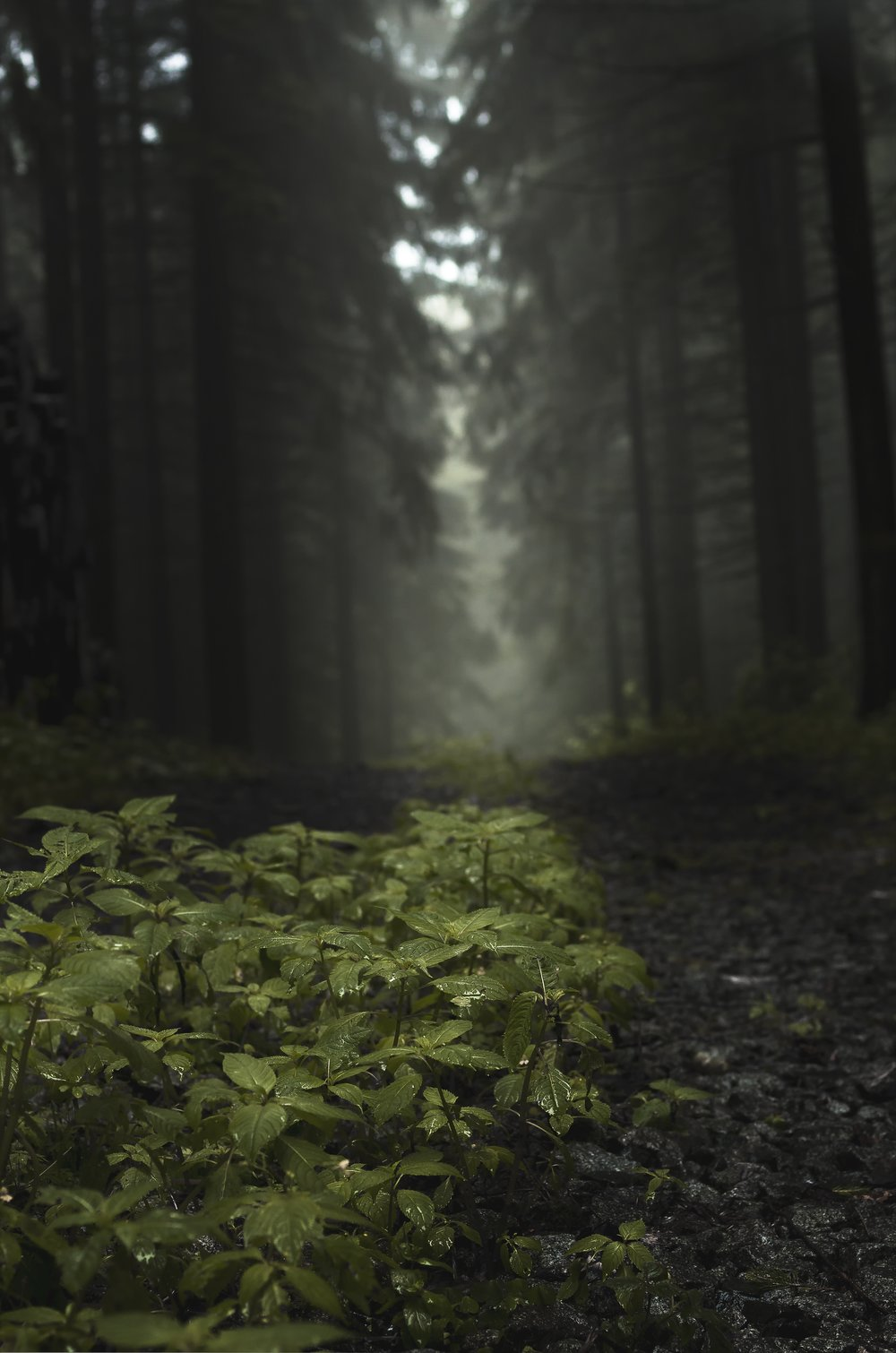 forest-2465475.jpg