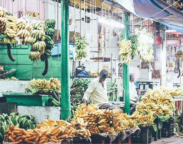 Mysore Banana Enterprise Ltd 🍌🍌🍌