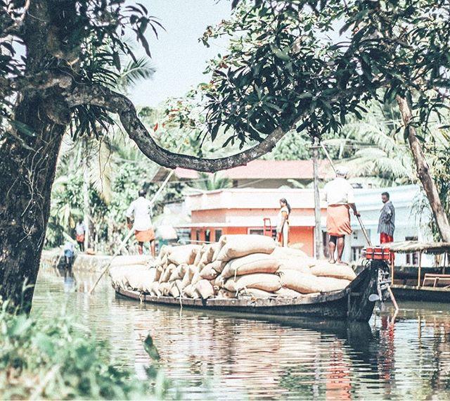 Kerala backwaters 🛶👨🏾🌴