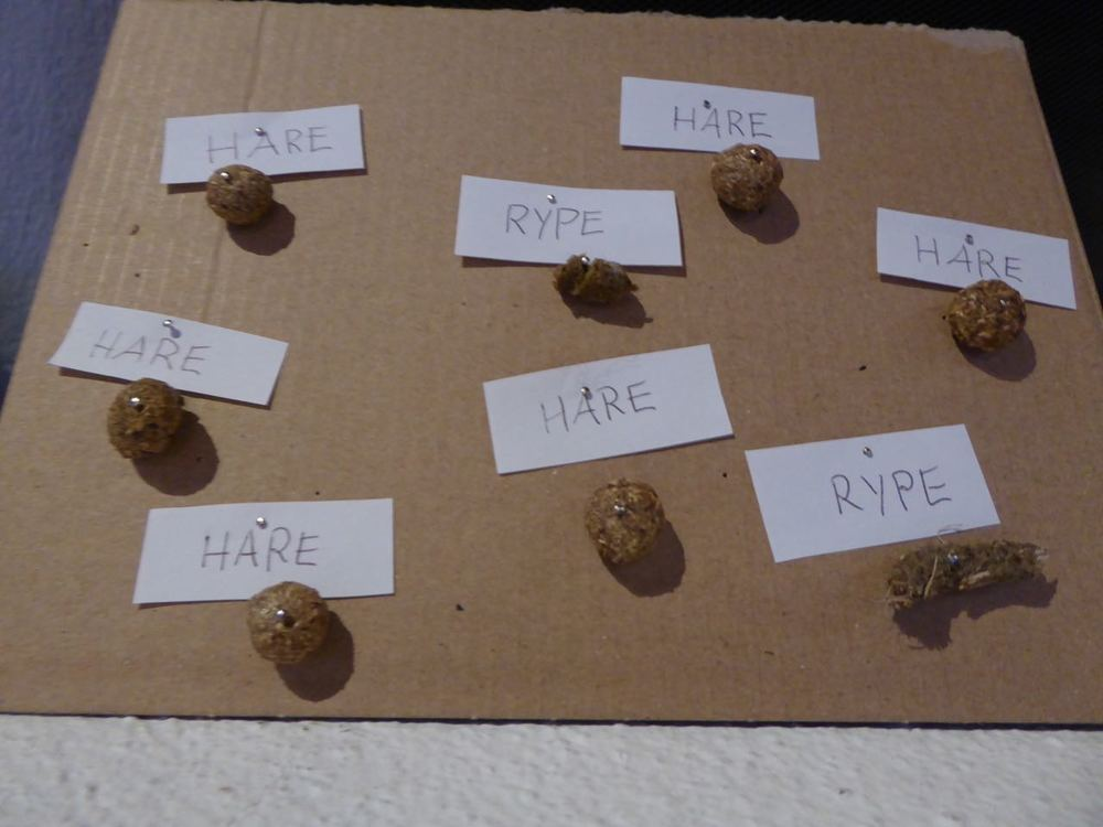 Jeg har laget dyrebæsj-herbarium.