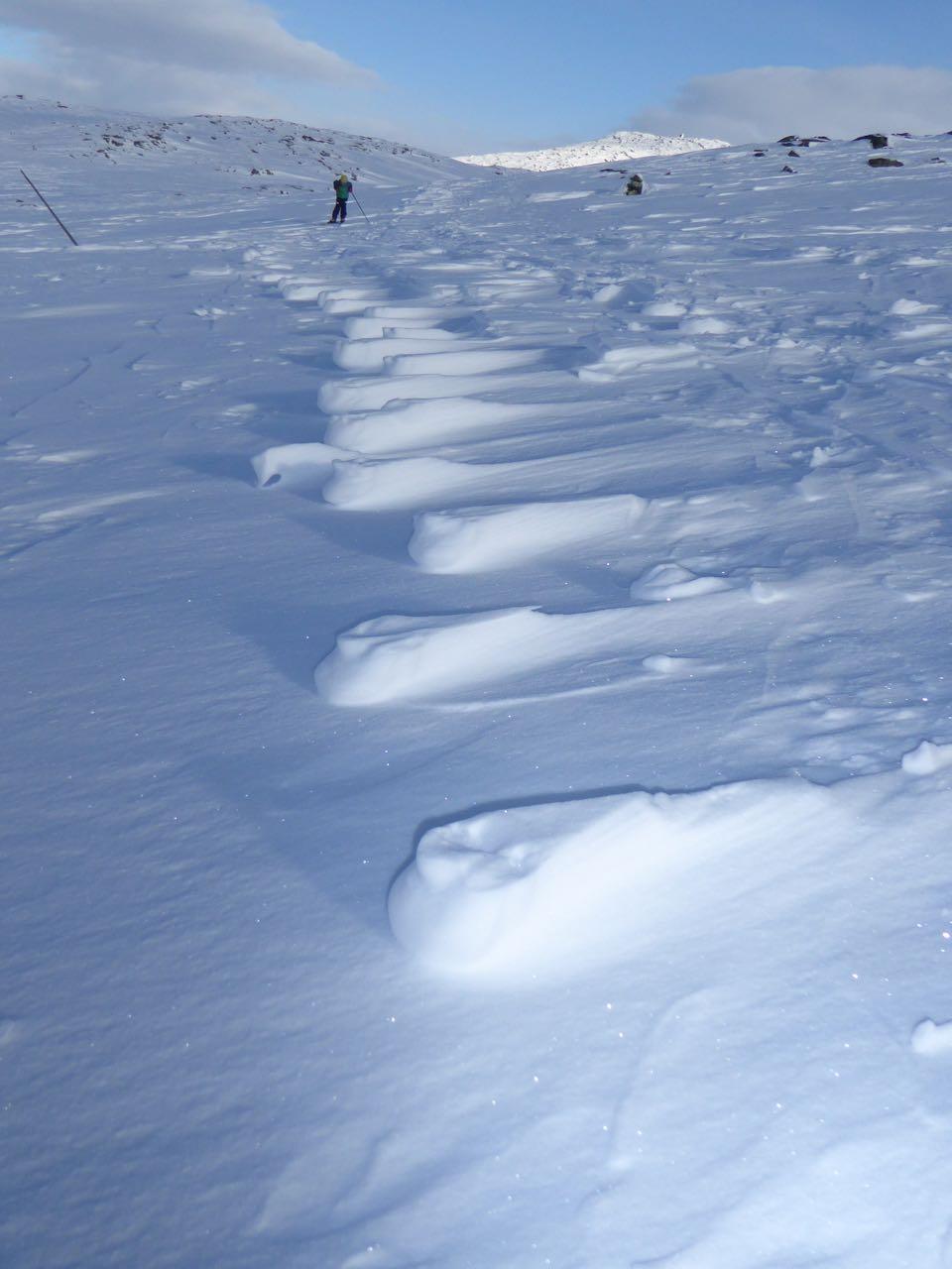 Mønster i fokk-snøen, kan det være laget av dyrespor?