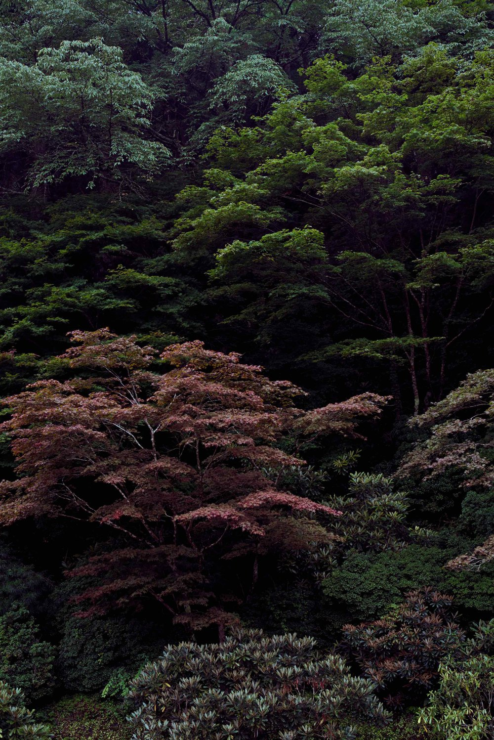 Japan_926_small.jpg
