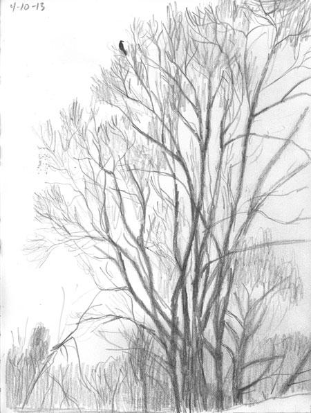 04-10-13-tree.jpg