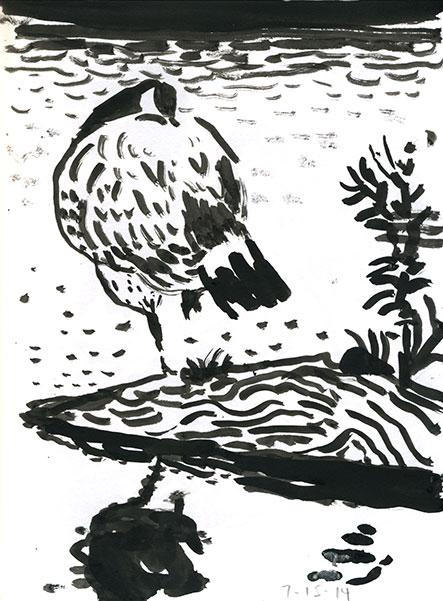 07-15-14-geese02.jpg
