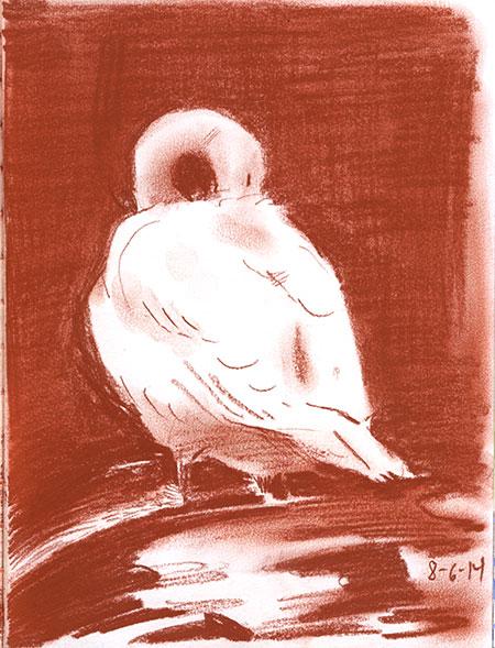 08-06-14-swan.jpg