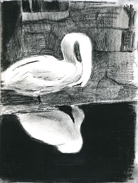 09-25-15-swan.jpg