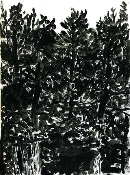 05-25-16-trees.jpg