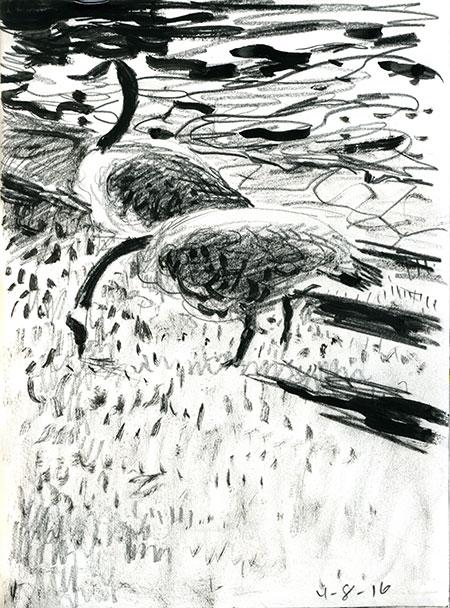 04-08-16-geese.jpg