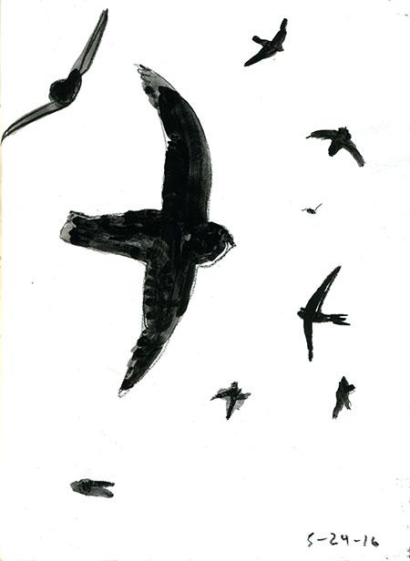 05-24-16-swifts01.jpg