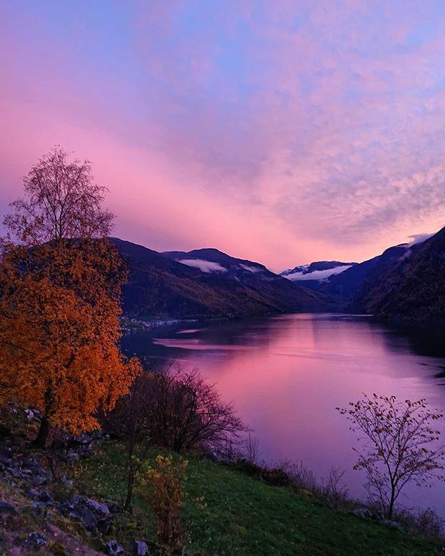 Hausten kan være fargerik//Autumn can be colorful 🍁🍂😍 #nærøyfjordenverdsarvpark #naroyfjordenworldheritagepark #unesco #aurlansfjorden #haust