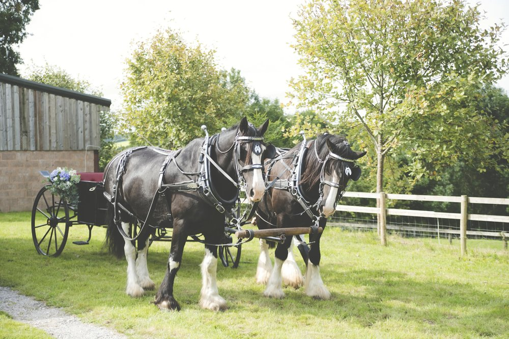 Flowers by Jennifer Pinder florist. Horse and cart flower decoration London Kent.jpg2.jpg