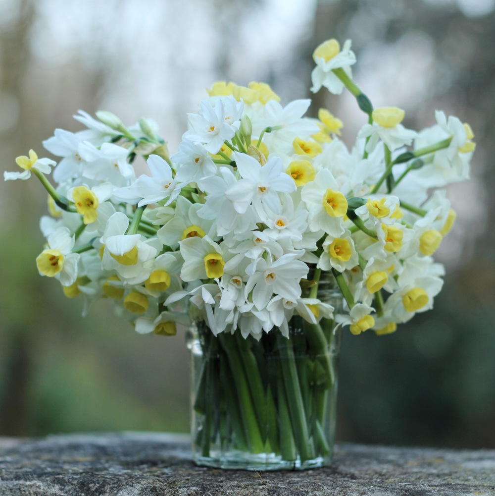 jar of white and pale yellow narcissi by Jennifer Pinder for a spring wedding at Fulham Palace