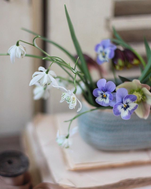 Thank you so much for all of your messages on my last post. They made me cry with happiness when I looked at them all! You guys are just the best. Today I've been hiding from the snow and making something ever so little with flowers from the garden. I'm practicing for a wedding with pansies I have coming up in a couple of weeks.  Now I must dash to the supermarket because apparently I have to be safely home by 6 or I will drown in the snow or something.... It looks pretty tame out there to me. Shivering dog and lambs aside. Speaking of lambs... Who else has been a sheep and joined the newest social media buzzing about on stories? The fomo hit and I signed up but not sure I can manage more admin?! What do you all think? Leave your name below so I can follow you if you have joined too! I'm Jennifer Pinder Fowers xx . .. . .. . . . . #snowdrop #snowdrops #pansy #pansies #spring #hellebore #helleboreappreciationsociety  #flowers #flowerstagram #decoration #stylist #styleblogger #interiordesign #englishcountryhouse #fritillaria #decor #decoration #designer #londonflorist #꽃스타그램 #꽃 #런던플라워 #스타일 #vintage #antiques #underthefloralspell #spring #springflowers #garden #gardening