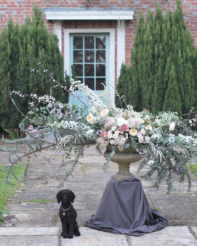 Matilda for scale. Gorgeous weather yesterday for a 1-2-1 with @passionflowersbyemmaspowage we covered (gigantic) urns and installations. Excited to see the profesh photos from @joellen_pictures . Now onto prepping for the @chidd_castle wedding fair taking place tomorrow. So many lovely suppliers do pop along and say hello 💕💕 have an amazing weekend xxxx @chiddingstonecastlewedding #dogsofimstagram #cockapoo #cavapoo #wedding #englishcountrygarden #flowers #spring #roses #blossom #underthefloralspell #lilac #countryhouse #dogwalk #dsfloral #inspiredbypetals