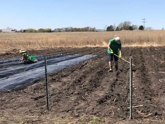Planting IMG_1630.jpg