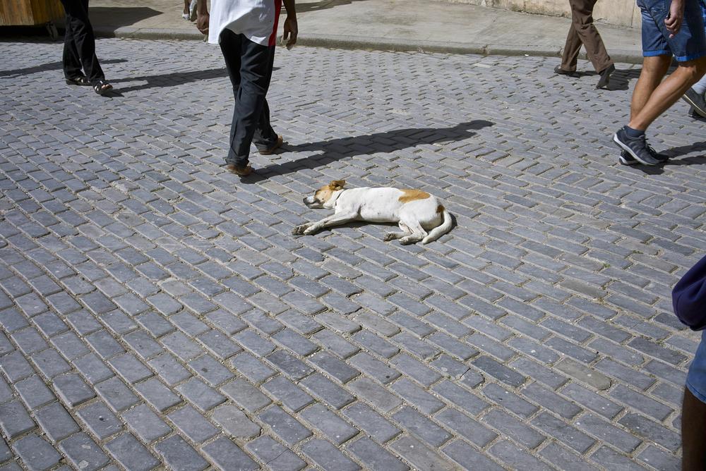 13 Sleeping dog.jpg