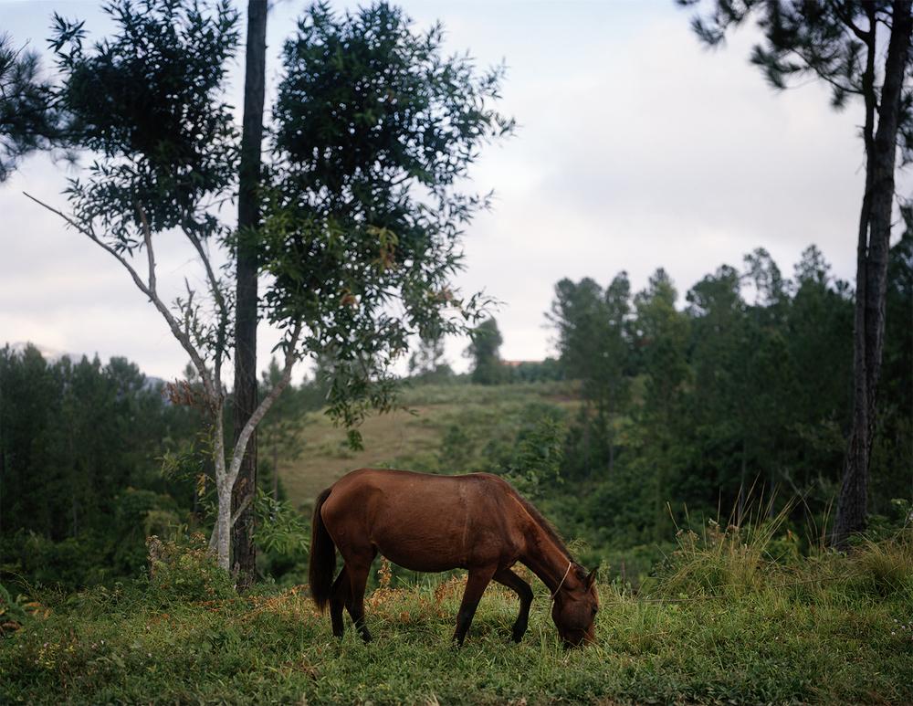2014_Cuba- Donkey.jpg