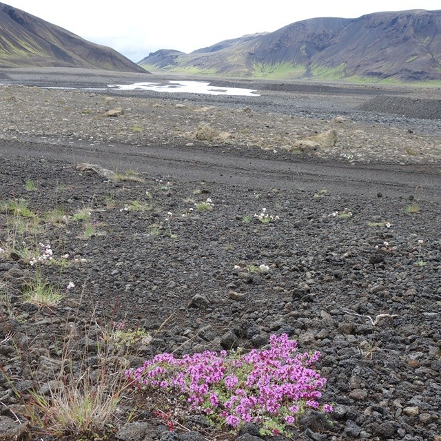 Pink is not the norm here (at Iceland)