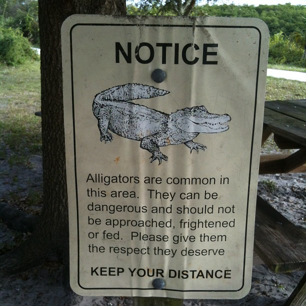 Cool. (Taken with  Instagram  at Jonathan Dickinson State Park; River Camp Ground)