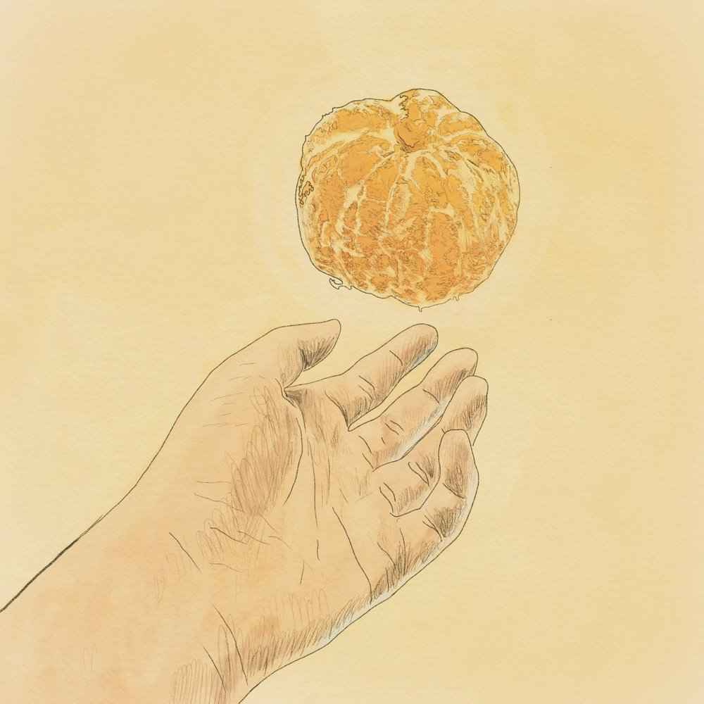 Gyul (Tangerine)  by Seowon (Angela) Lee