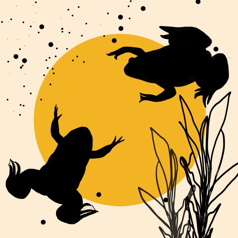 Frogs  by Franziska Nace