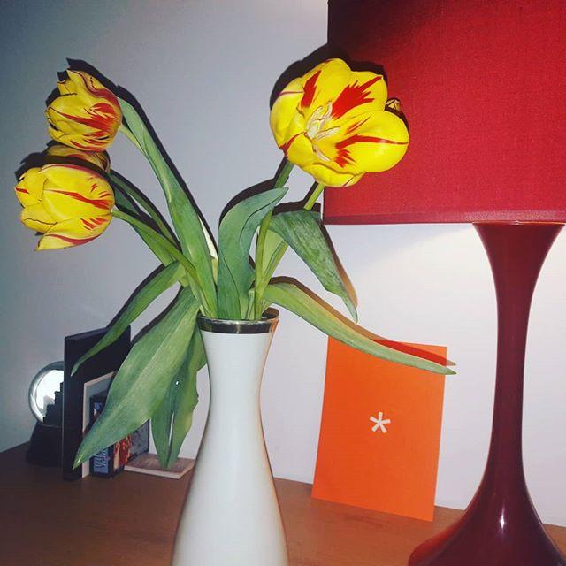 Soirée projection avant-première à la Scam #filmrock&tulipe