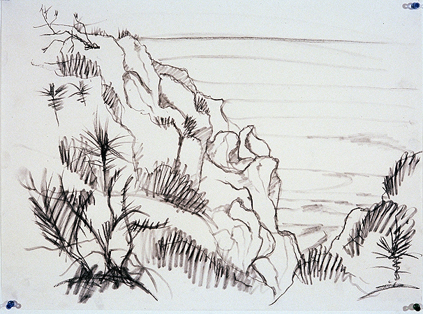 Torrey Pine Cliff,  charcoal on paper,  1999