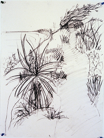 Torrey Pine High Path,  charcoal on paper,  1999
