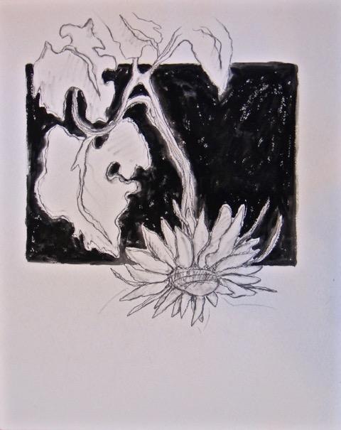 Sunflower Study, 20 x 16