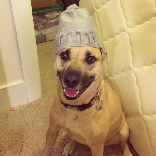 Dog wearing a Super Grover helmet