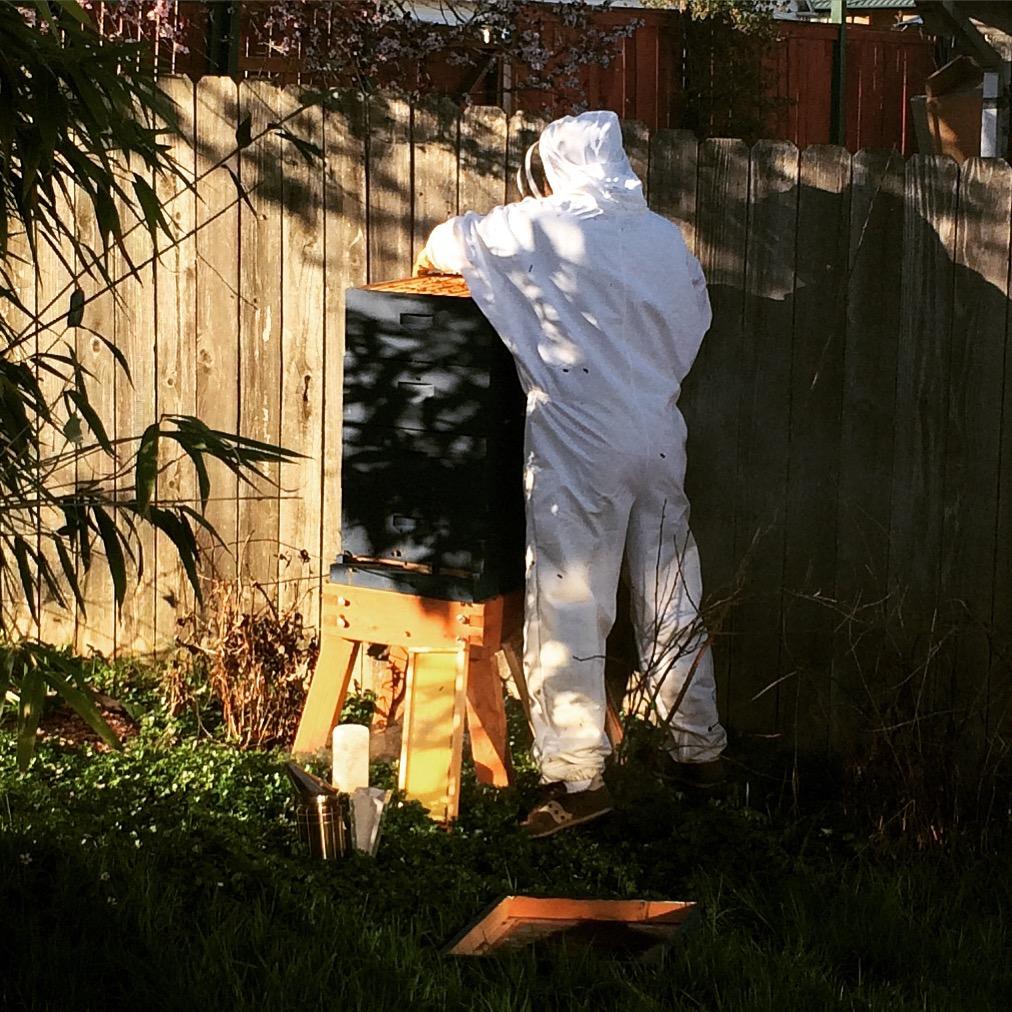 Bee hive check
