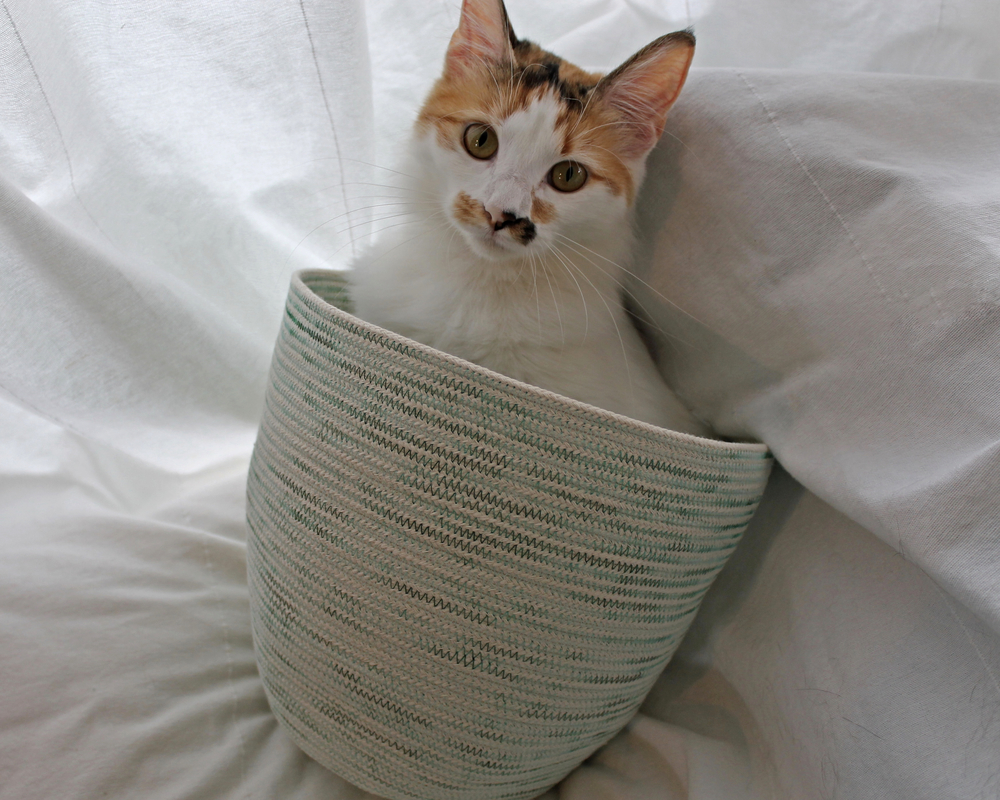 Calico cat in green rope basket