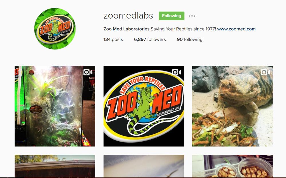 Social Media Marketing for Reptile Shops : Instagram