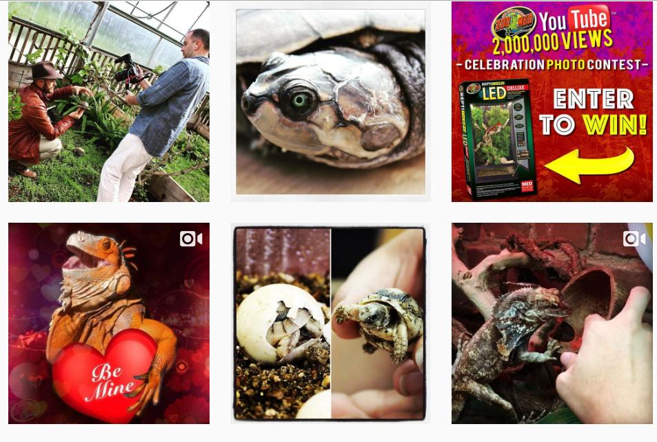 social media marketing for reptile shops: instagram
