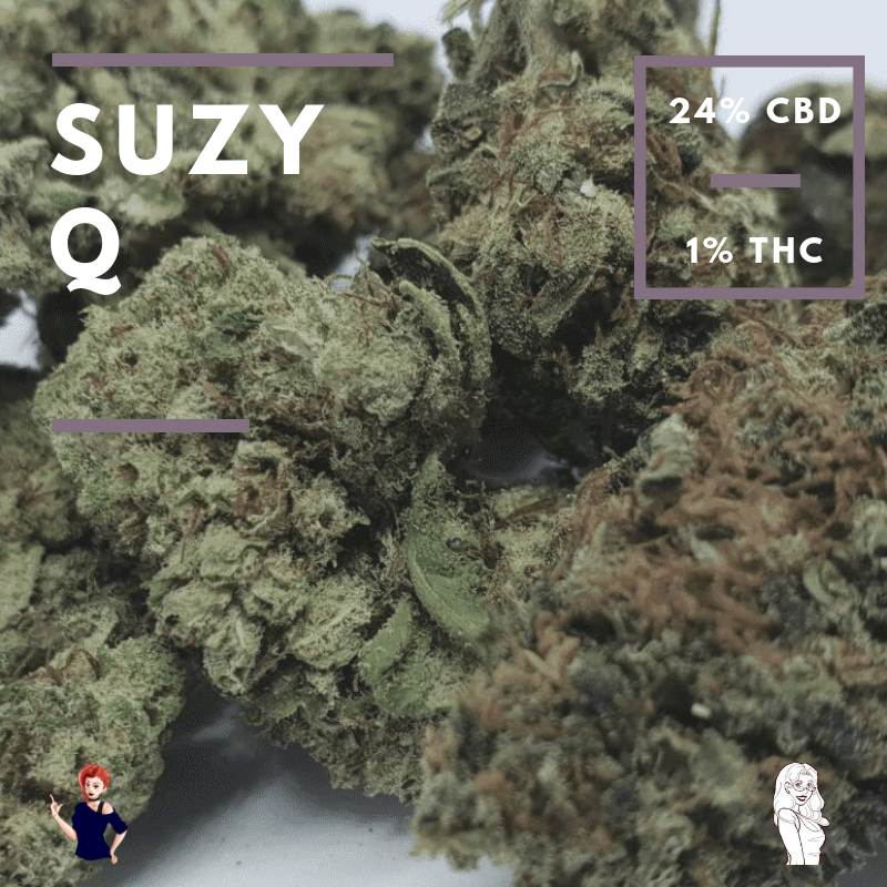 Suzy Q (CBD Strain Review) | Booklexia Content Marketing, cannabis content marketing