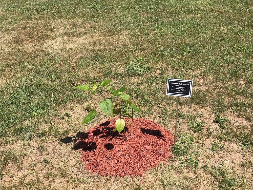 Luis' dedication tree 2018.JPG