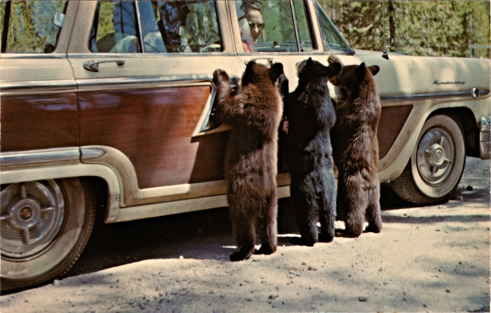 three-bears.jpg