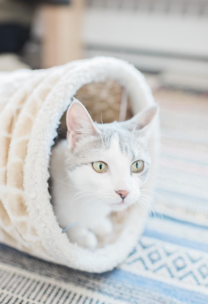 Cat Cafe on Whyte