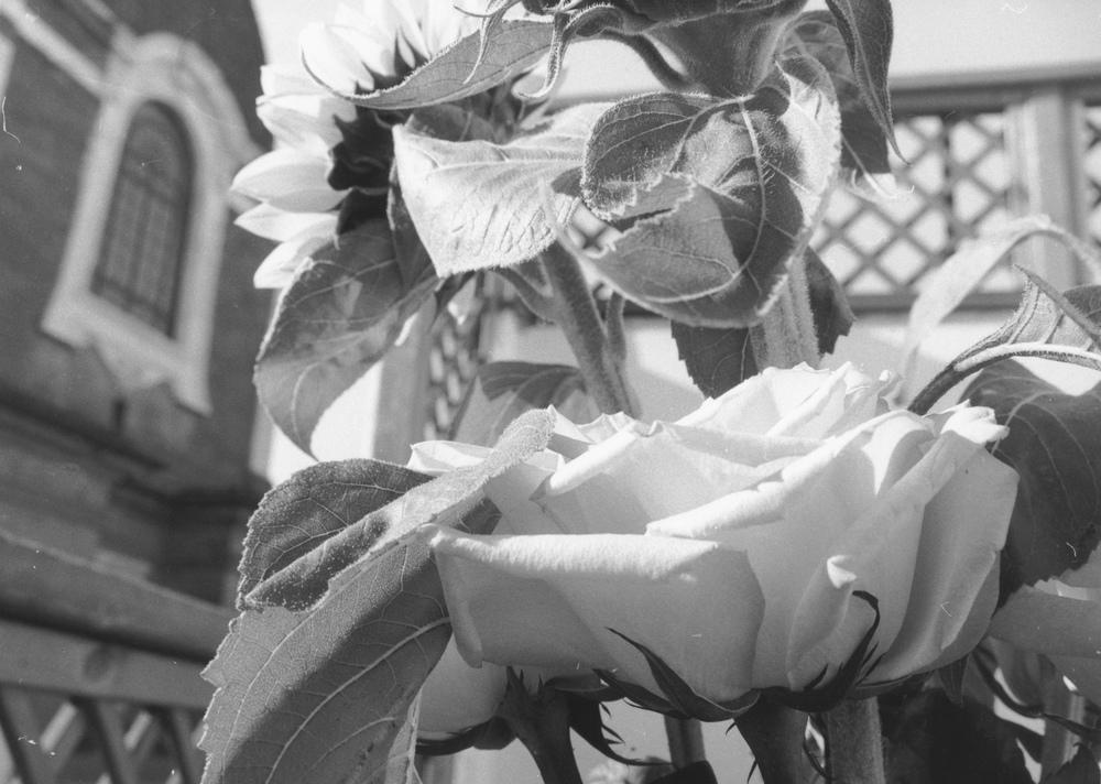 Flowers at San Lorenzo