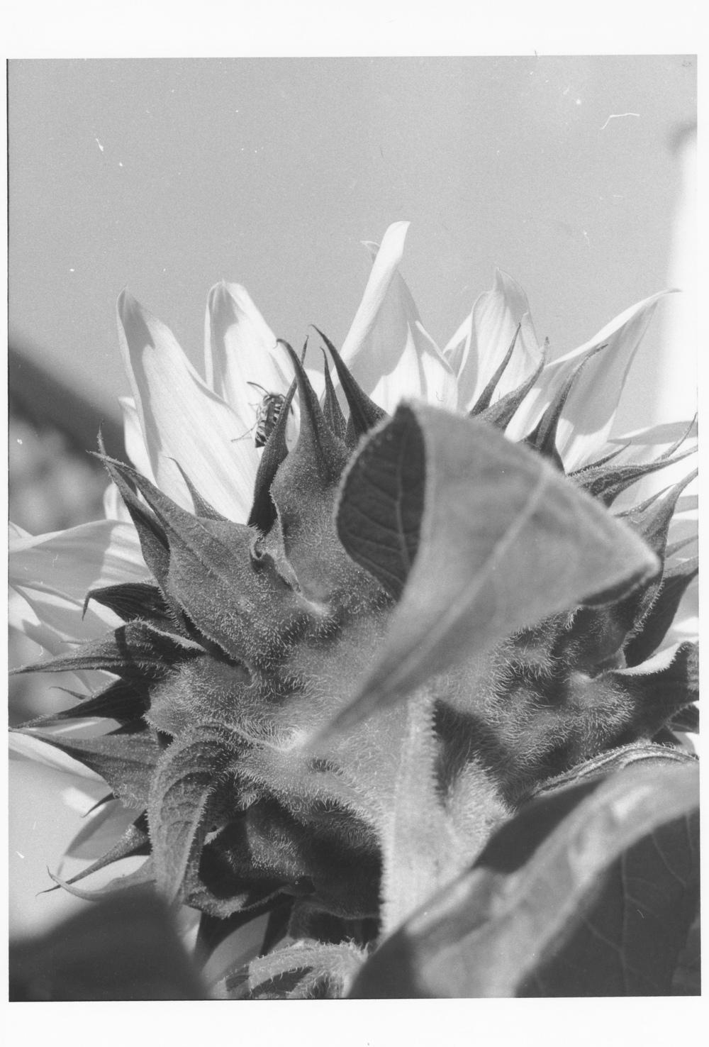 Flowers at San Lorenzo #2