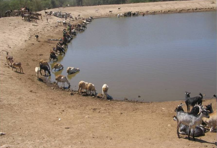 water pond.jpg