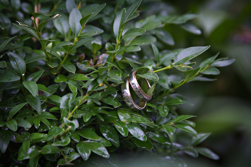 wedding rings in tree