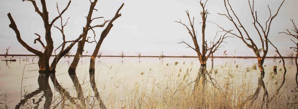 Nookamka rushes, Lake Bonney.jpg