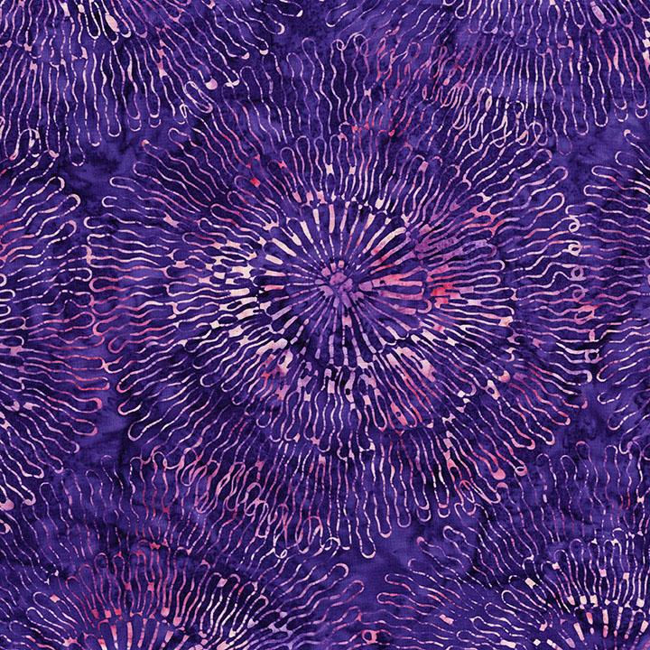 3504-004 Big Bloom-Phlox.jpg