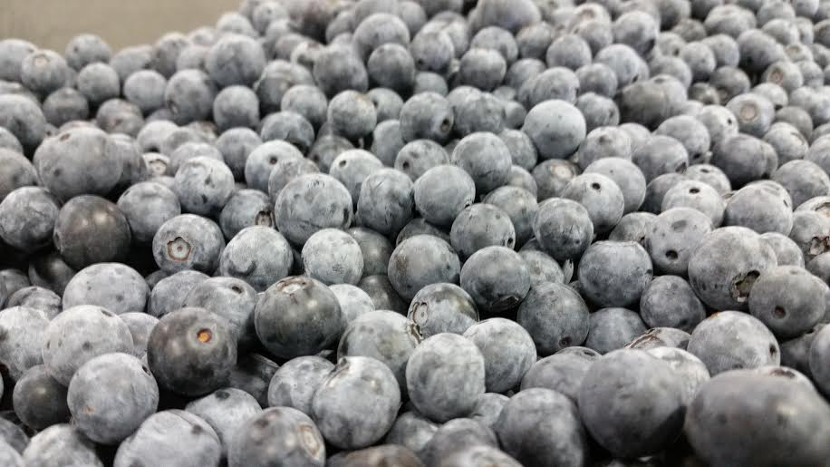Blueberry Close-up.jpg