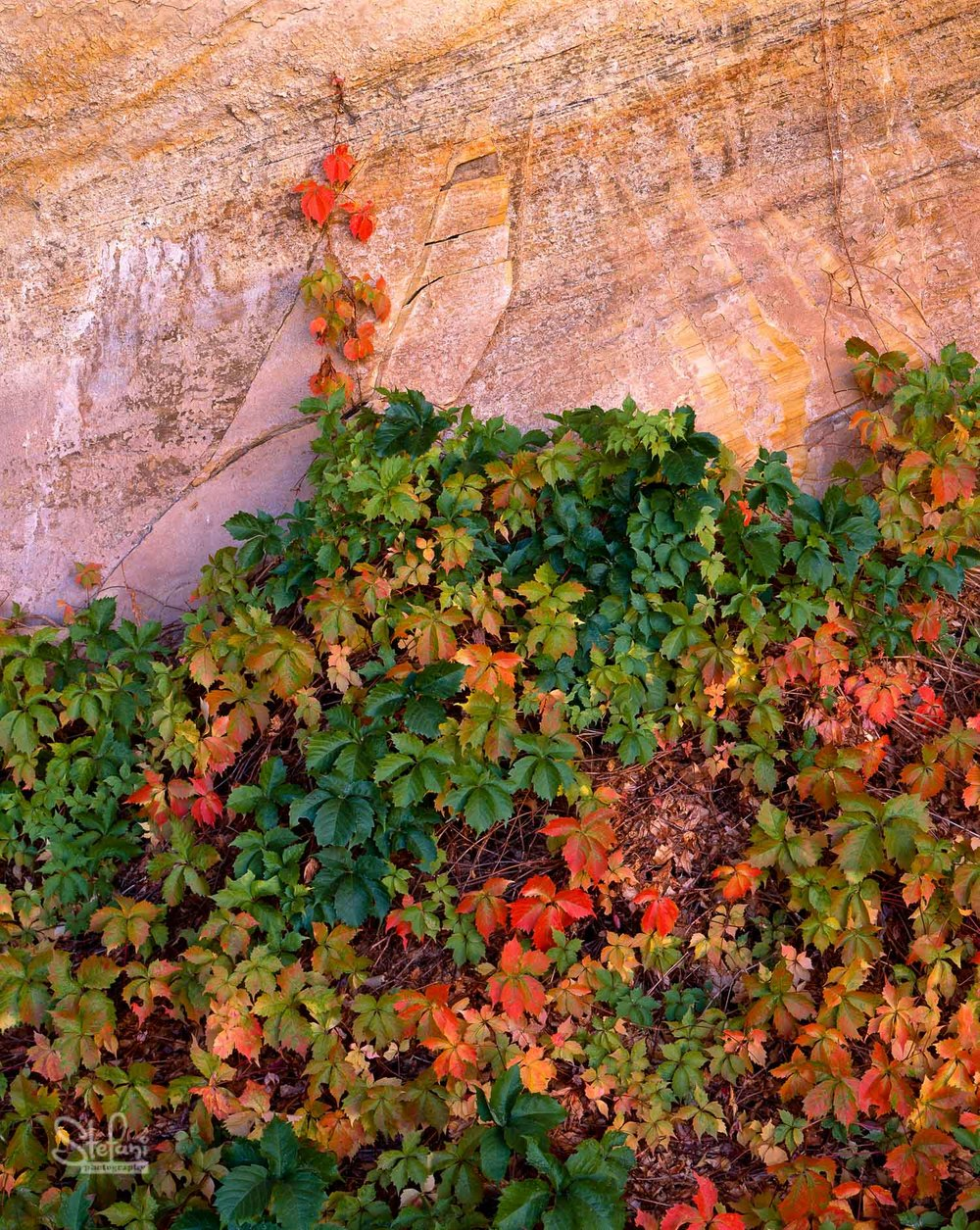 AUTUMN IN MONARCH CANYON
