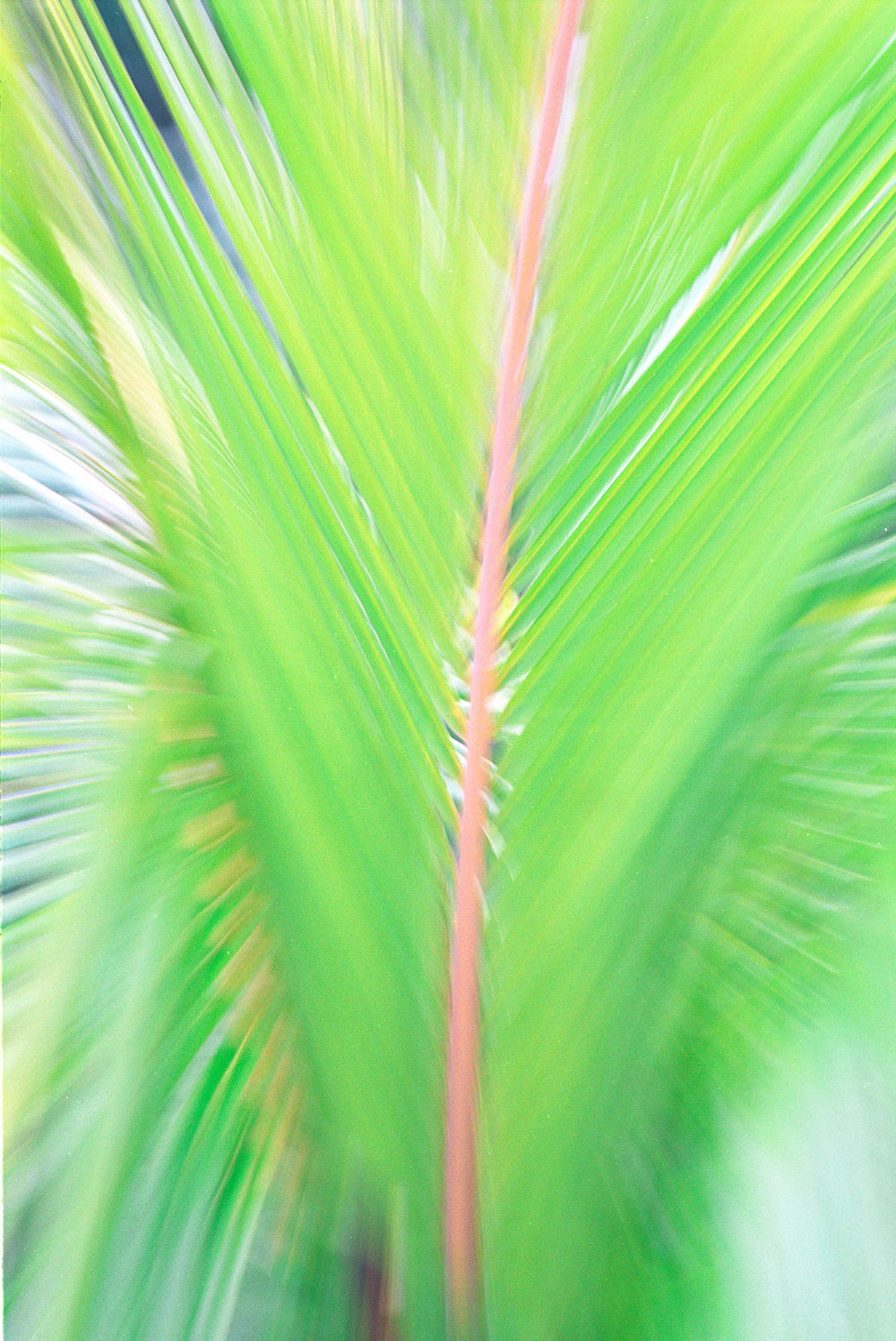 PALM ABSTRACT
